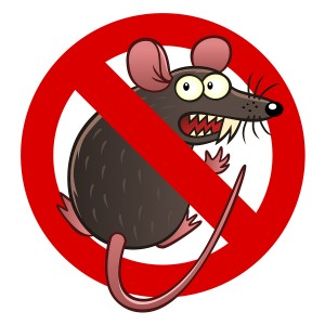 What to do if a rodent makes a nest in your car in Anchorage, AK